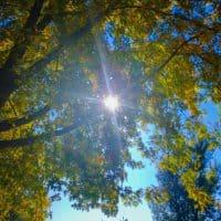 Sonne scheint durch Baumkronen - Sinnbild für Durchblick bei der Suche nach einer Coaching-Ausbildung
